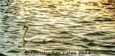 Yates9796